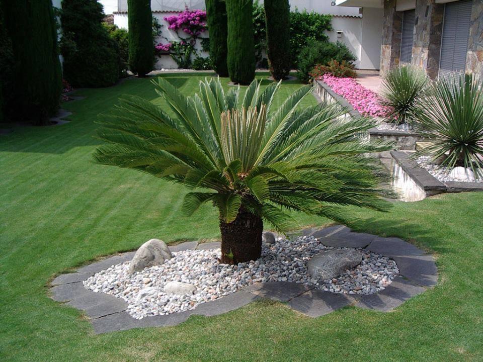 Aiuole giardino idee ue75 regardsdefemmes for Solo piante
