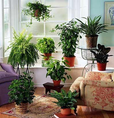 piante-dappartamento-L-jiRjSx.jpeg